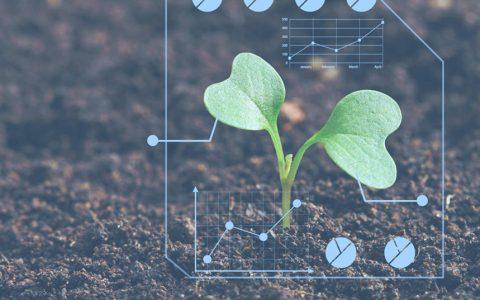 IBM研究团队将通过区块链促进非洲农业发展