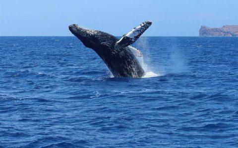 BTC链上数据透视:78%的巨鲸地址无支出,日活地址半年增长40%