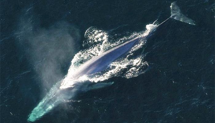 加密鲸鱼启动近期反弹?